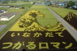 TAMBO ART ou l'art des rizières