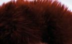 Boule se dévoile avec L'Ours Polaire sur l'album Appareil volant imitant l'oiseau naturel